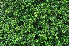 Groene zachte en donkere uiterst kleine bladerenachtergrond Royalty-vrije Stock Foto