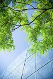 Groene zaken Stock Foto