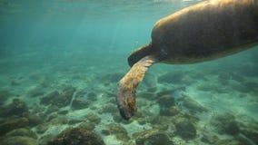 Groene zeeschildpad onderwater komst omhoog voor lucht stock videobeelden