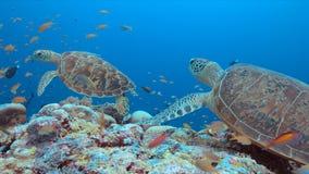 Groene Zeeschildpad op een koraalrif Stock Afbeelding