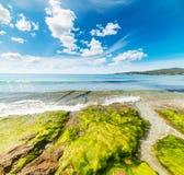 Groene zeewieren op de rotsen in het strand van Le Bombarde stock foto's
