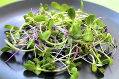 Groene zonnebloemspruiten en purpere radijs micro-greens salade op een zwarte plaat Royalty-vrije Stock Foto