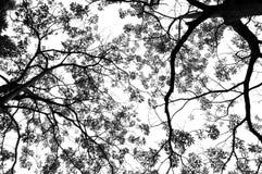 Groene zwart-wit bladeren en takken Stock Foto
