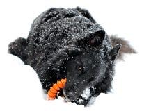 Groenendael in de sneeuw Royalty-vrije Stock Foto's