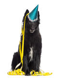 Groenendael sitting, wearing a party hat, Royalty Free Stock Photography