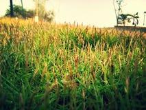 groenheid Royalty-vrije Stock Foto