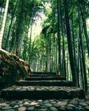 groenland Stock Afbeelding
