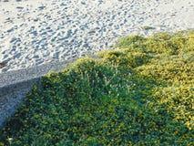 Groentapijt op een zandig strand Royalty-vrije Stock Fotografie