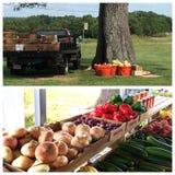 groente en fruittribune stock afbeeldingen