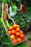 Groente in tuin Royalty-vrije Stock Fotografie