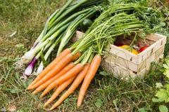 groenten Stock Foto's