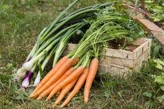 groenten Royalty-vrije Stock Foto