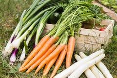 groenten Royalty-vrije Stock Foto's