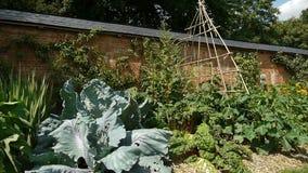 Groenten bij een botanische tuin stock video