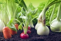 Groenten in de tuin Royalty-vrije Stock Afbeeldingen