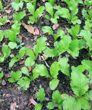 Groenten in een klein tuin plantaardig perceel Stock Foto