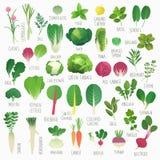 Groenten en kruiden Stock Afbeeldingen