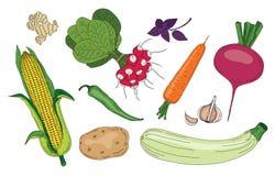 Groenten en kruiden verse de lente groene organische vectorinzameling stock foto's