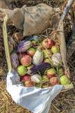 Groenten en vruchten in een mand Royalty-vrije Stock Afbeeldingen