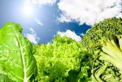 Groenten en zon Stock Foto