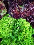 Groenten groene verse salade in markt dichte omhooggaand royalty-vrije stock fotografie