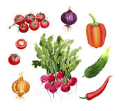 Groenten: radijs, tomaten, ui, peper, Spaanse pepers, komkommer Royalty-vrije Stock Fotografie