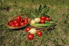 Groenten voor picknick Stock Foto
