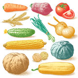 Groenten, Vruchten en Installatieskleurenvector Royalty-vrije Stock Foto