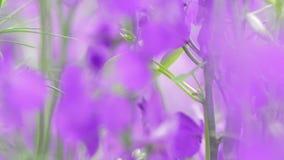 Groep angeloniabloemen in onduidelijk beeld