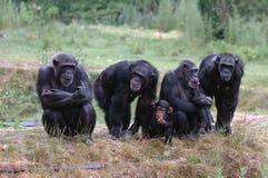 Groep apen Royalty-vrije Stock Afbeelding