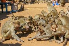 Groep apen stock afbeelding