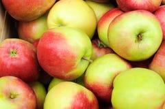 Groep appelen Stock Foto's