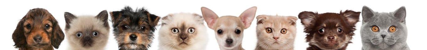 Groep bebouwde mening van de hoofden van de Kat en van de Hond Stock Foto's