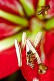 Groep bijen Stock Afbeelding