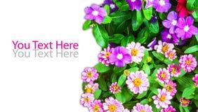 Groep bloem met spatie Royalty-vrije Stock Fotografie