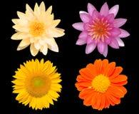 Groep bloemen over zwarte achtergrond wordt geïsoleerd die Royalty-vrije Stock Foto's