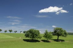 Groep bomen Royalty-vrije Stock Afbeelding