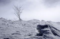 groep bomen in de mist in de bergen slechts één getoonde die boom wordt verborgen Stock Foto