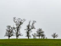 Groep bomen en grijze hemel Stock Foto
