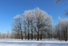 Groep bomen met vorst en weg in de winter tegen de blauwe hemel in rustige wolkenloze dag worden behandeld die Stock Afbeelding