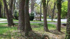 Groep bomen op een vreedzaam landschap stock afbeelding