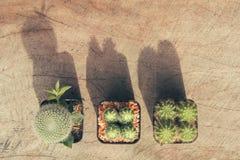 Groep cactusinstallaties en exemplaar ruimte, uitstekende stijl Stock Foto