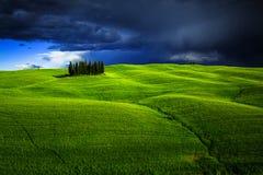 Groep cipresbomen in Toscanië Stock Fotografie