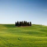 Groep cipressen in Toscanië Royalty-vrije Stock Afbeeldingen