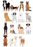 Groep de grote en midden getrokken grafiek van hondenrassen hand vector illustratie