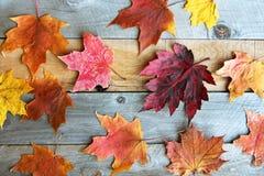 Groep de Kleurrijke Bladeren van de Dalingsesdoorn op Houten Achtergrond stock foto