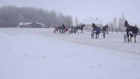 Groep de paarden van de ruitersopwarming vóór ras in renbaan 4K stock videobeelden