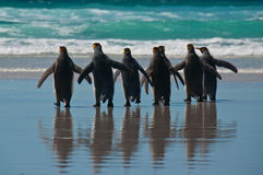 Groep de Pinguïnen van de Koning op het Strand
