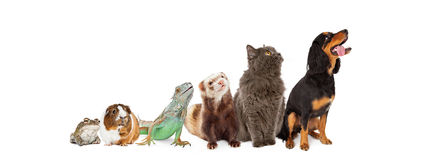 Groep die Huisdieren Omhooggaande en Zijbanner kijken Stock Foto