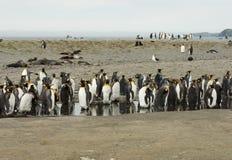 Groep die Koning Penguins in een Vijver ruien stock foto